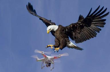 orn_drone