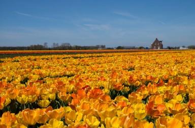 Holland spring